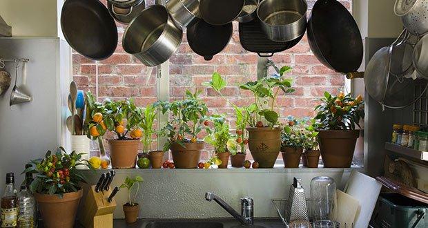 Plantes qui Dépolluent votre Maison