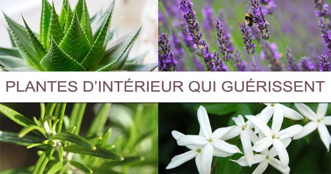 6 Plantes d'intérieur à Faire Pousser dans votre Chambre qui Peuvent Améliorer Considérablement Votre Santé