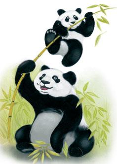 Circulaire-Panda-Chaussures-en-ligne
