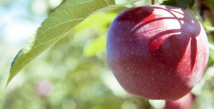 Trucs et Astuces; Bienfaits de la Pomme