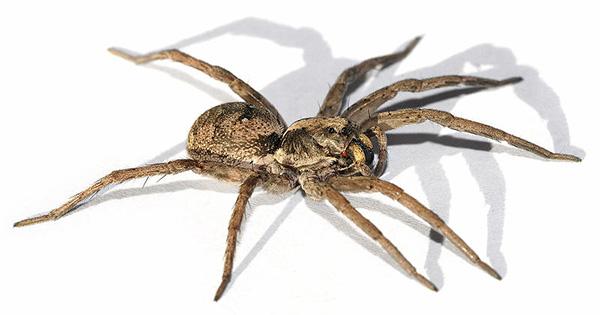 8 trucs naturels contre les araignées