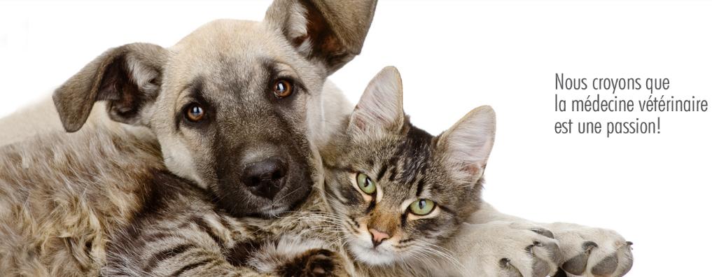 Clinique Vétérinaire de la Mennais en Ligne