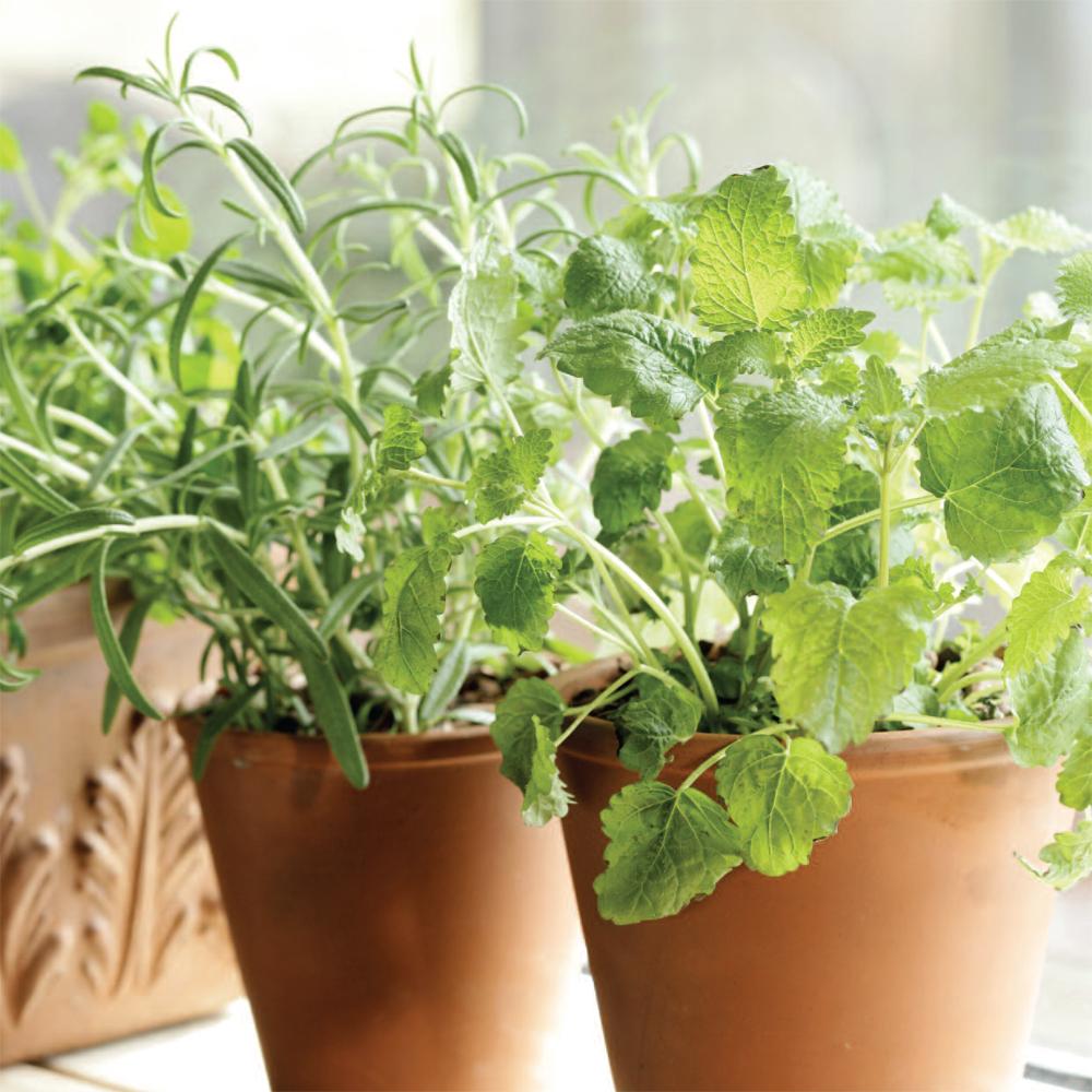 Comment Avoir des Fines Herbes Fraîches tout L'hiver