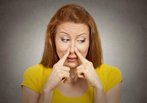 Comment Débarrasser votre Maison de L'odeur de Chien