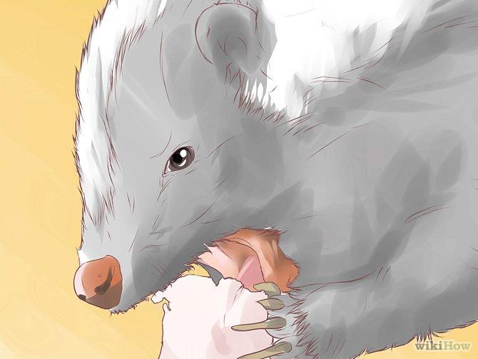 Comment se Débarrasser des Moufettes