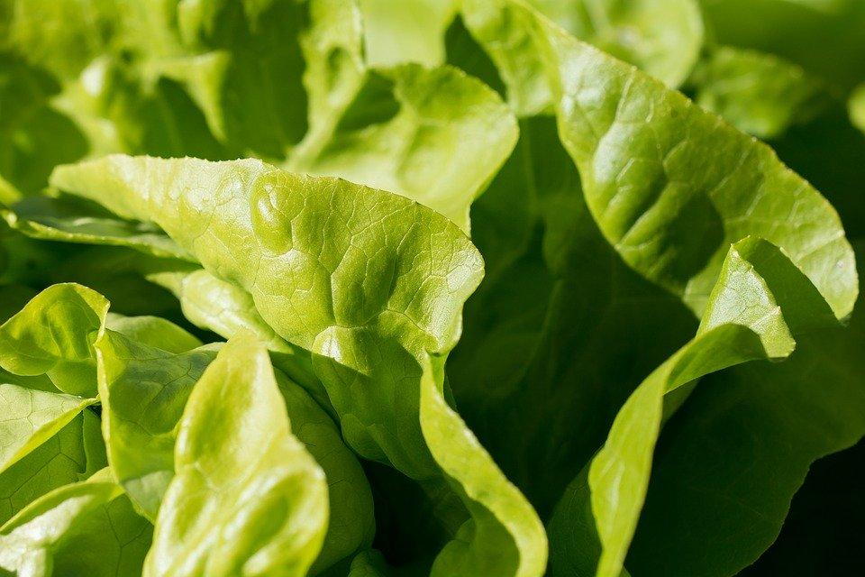 Conseils sur la Salubrité pour les Légumes-feuilles