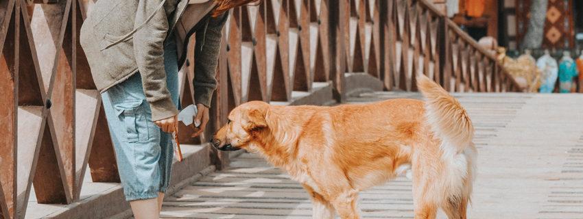 Découvrez les Endroits Dog-Friendly Près de Chez Vous!