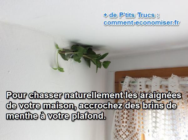 Des Araignées dans Votre Maison ? Le Truc Naturel Pour les Chasser Définitivement