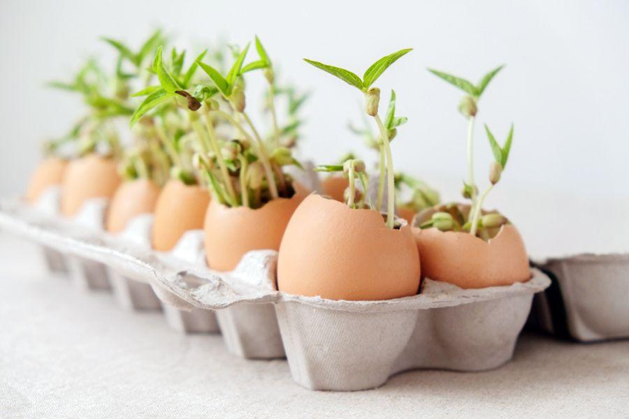 Des Semis Faits-Maison avec des Matériaux Organiques Recyclés