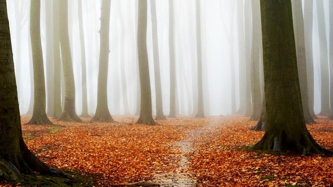 Dix Trucs pour vous Préparer à Traverser L'automne