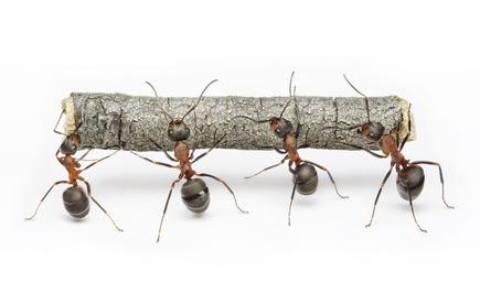 8 trucs naturels contre les fourmis circulaire en ligne. Black Bedroom Furniture Sets. Home Design Ideas