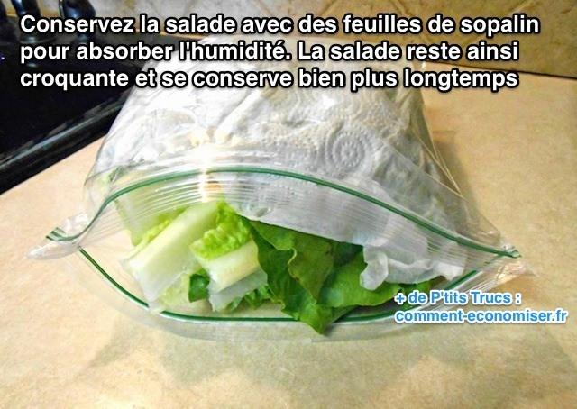 L'Astuce Géniale Pour Conserver de la Salade au Frigo Plus Longtemps