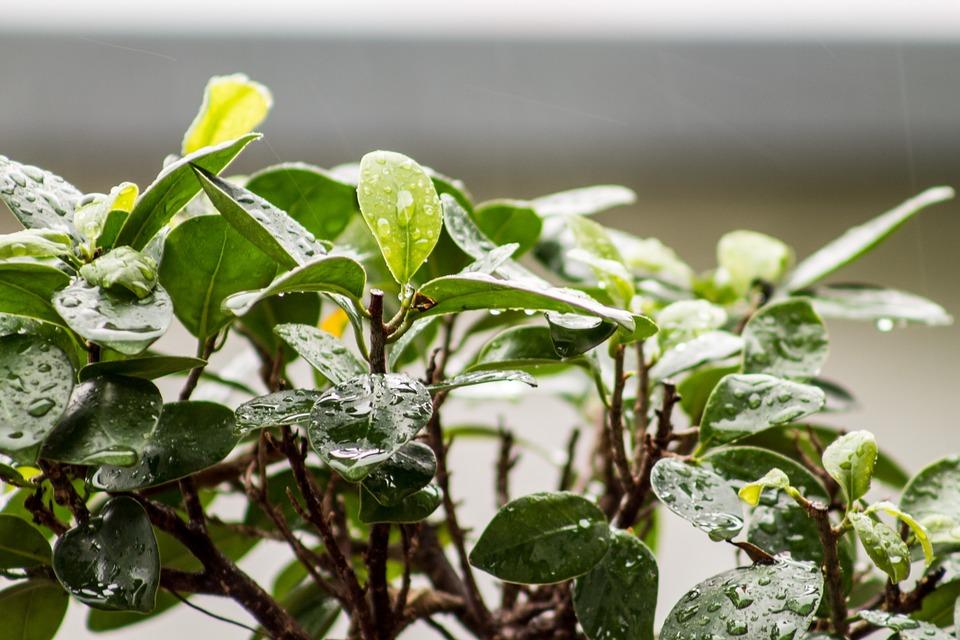 Nettoyer et Soigner les Plantes D'intérieur