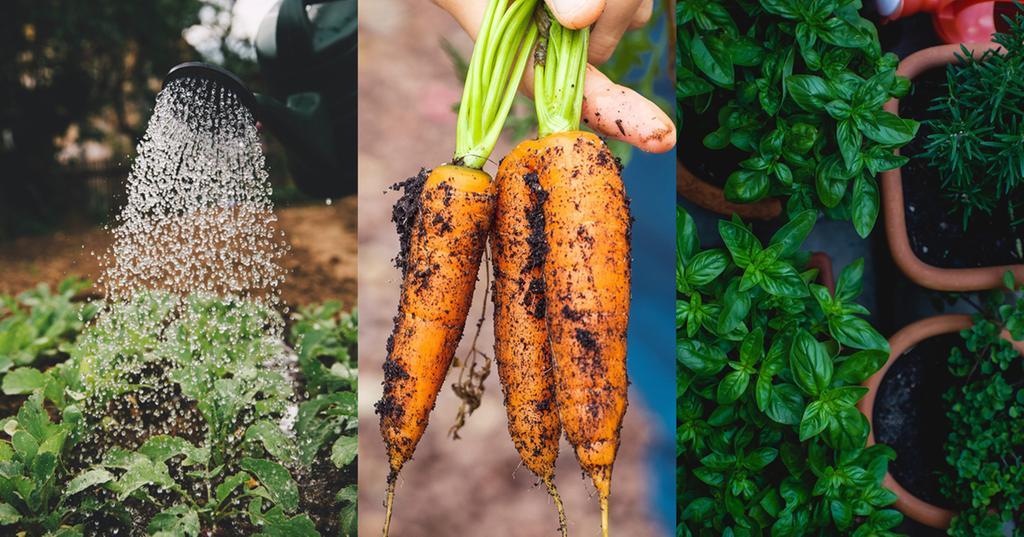 Petit Guide du Potager, Tout Savoir pour un Jardin Parfait!