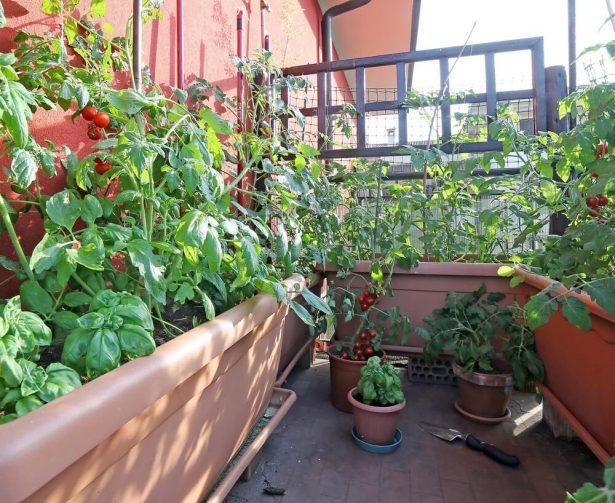 Potagers Urbains : Quelques Conseils pour Récolter des Légumes Moins Pollués