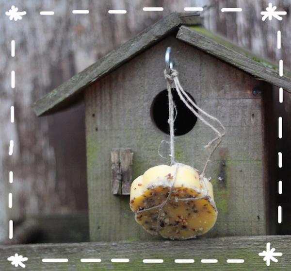 Recettes de Boules de Graisse pour les Petits Oiseaux
