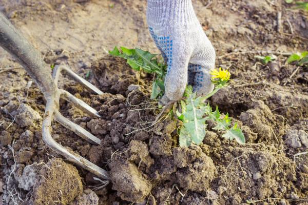 Se Débarrasser des Mauvaises Herbes