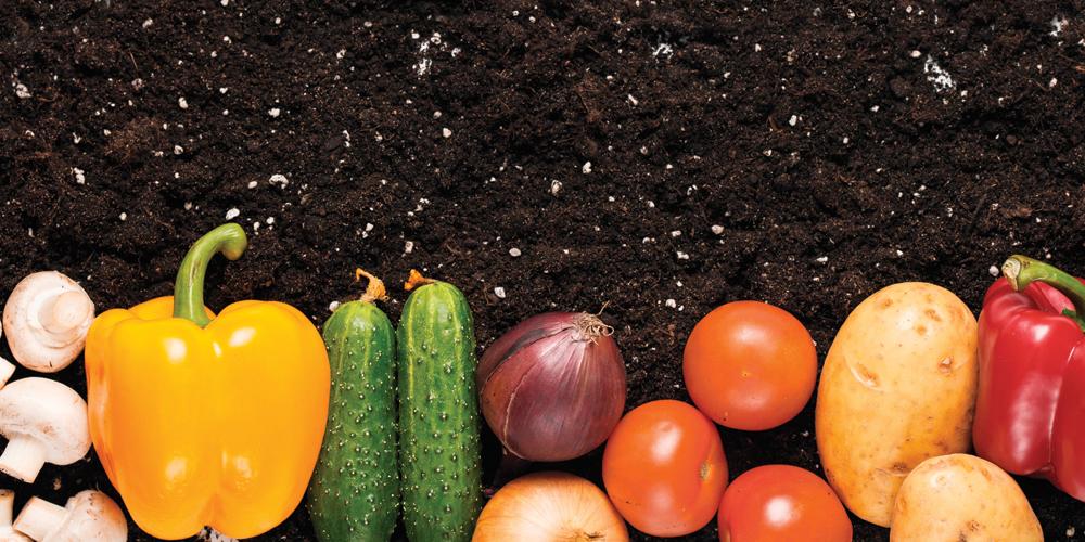 Top 10 des Légumes qui Poussent Tout Seuls