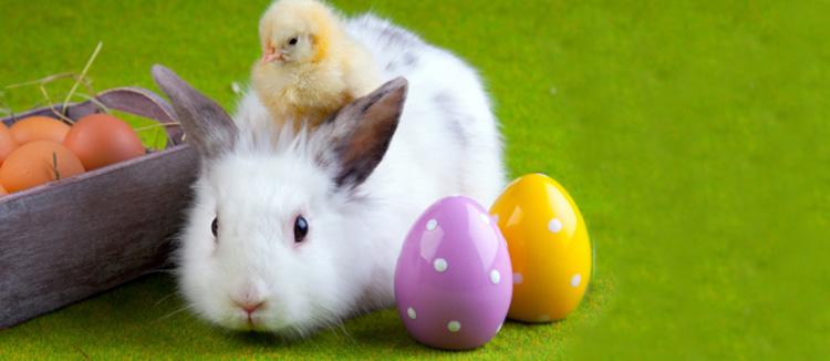 Trucs et Astuces pour Préparer Pâques