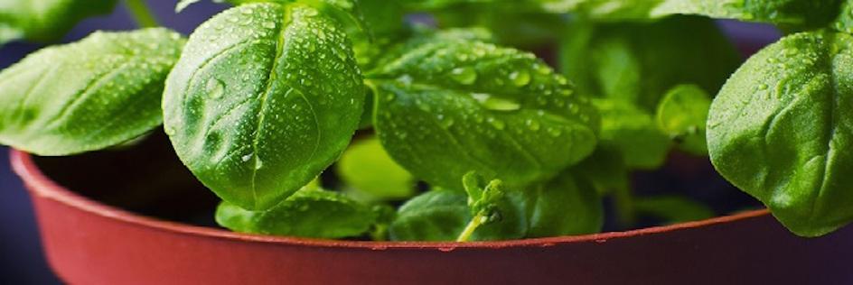 Un Potager D'intérieur pour Cultiver Facilement Fruits et Légumes