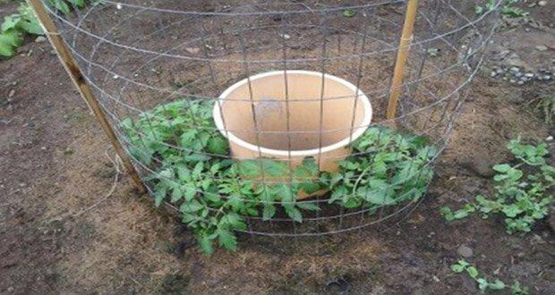 Une Idée de Génie pour faire Pousser des Tomates
