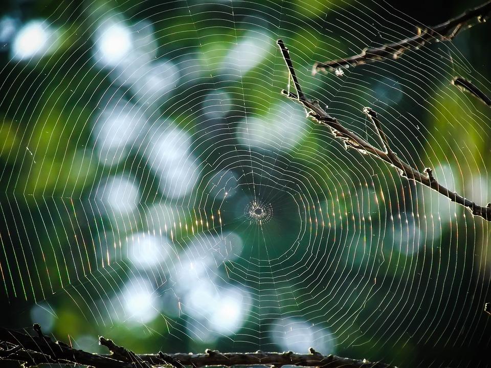 Voici Comment Garder les Araignées Loin de la Maison