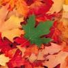 Guide de soins de la cour pour l'automne