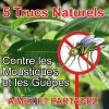 5 Trucs Naturels Contre les Moustiques et les Guêpes