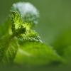 7 Remèdes Naturels pour Soigner les Maux de vos Enfants