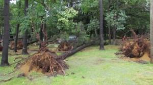 Ces arbres ont été renversés par les rafales à Pointe-du-Lac, en Mauricie