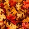 Idées Ingénieuses pour Utiliser les Feuilles D'automne