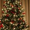 Comment conserver la fraîcheur de votre sapin de Noël