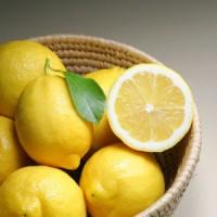 jus de citron remède herbe à puce
