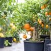 Voici 66 aliments qu'on peut faire pousser à la maison dans des pots